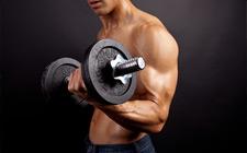 músculos dos braços